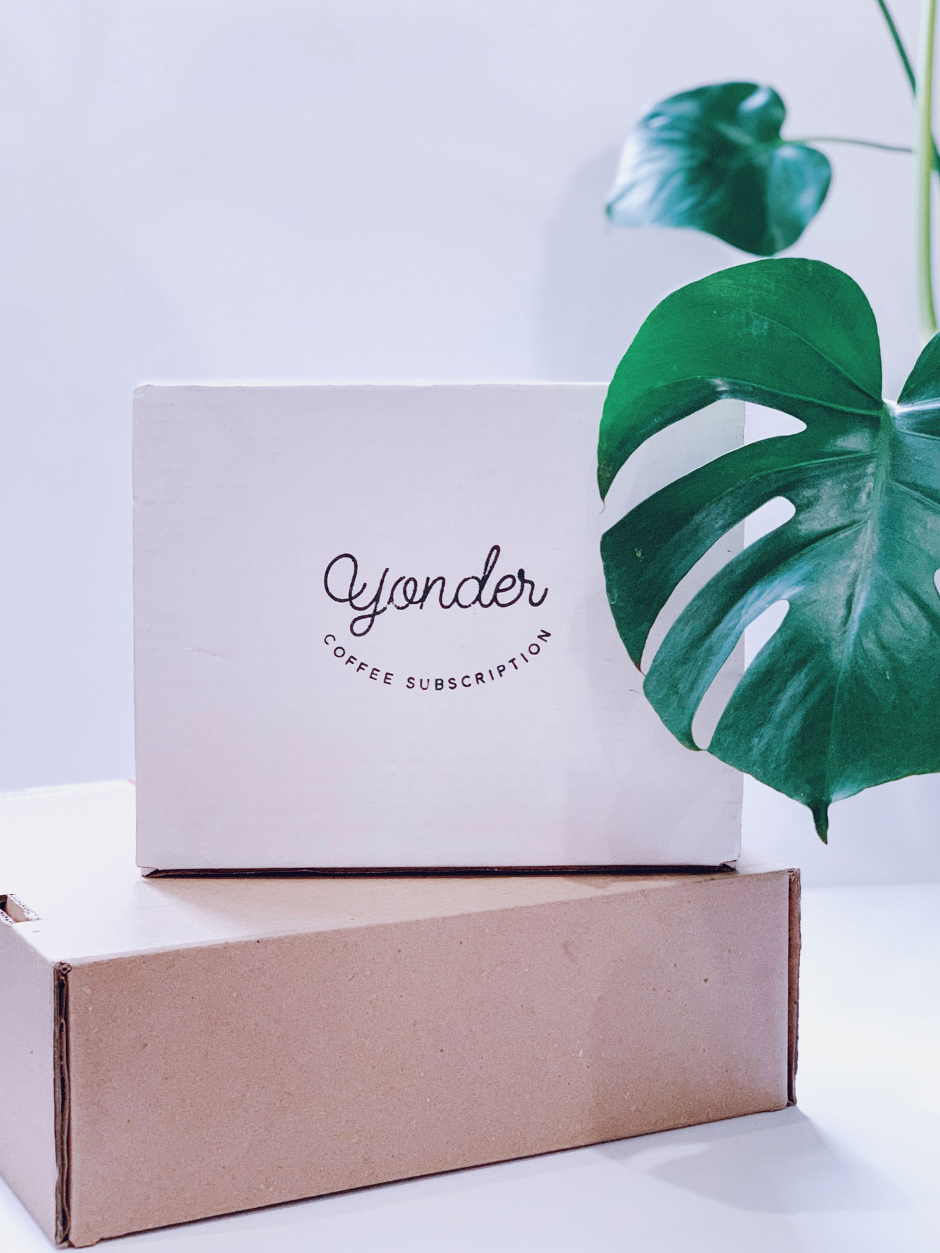 Yonder Coffee Packaging with Plant